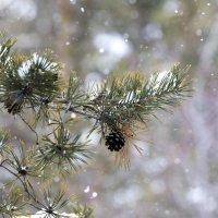 Снег :: Сергей