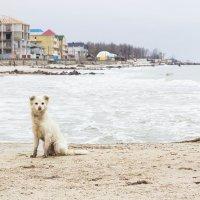 Одинокий пес :: Алёна Найдёнова
