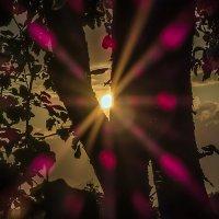 Лучи солнца из-за дерева. :: Валерий Изотов