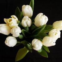 Тюльпаны :: Екатерррина Полунина