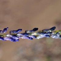Комар на цветке :: Анастасия Добрынина