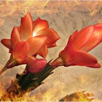 зимние цветы :: Надежда