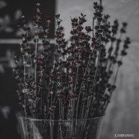 flowers :: Марк Додонов