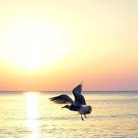 Утро над Чёрным морем :: Николай Ярёменко