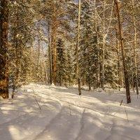 зимний лес :: Олег Мартоник