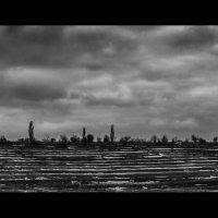 Striped Land :: Юрий Береза