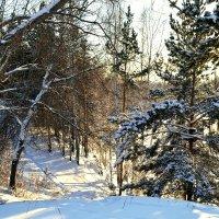 Морозное утро :: Людмила Якимова