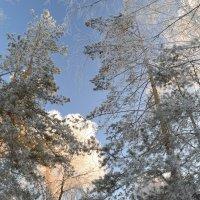 Деревья в серебре :: Людмила Якимова