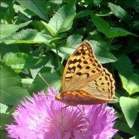 Амбербоа - рай для бабочек! :: Нина Корешкова