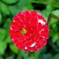 Цветы — самое лучшее из всего, что Господь создал... :: Mari Kush