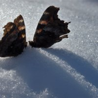 Скоро весна  !Ах. как летать охота. :: Николай Сапегин