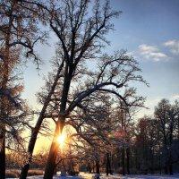 Скоро будем мы грустить о покрове снежном..... :: Tatiana Markova
