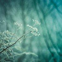 природа ещё спит :: Тася Тыжфотографиня