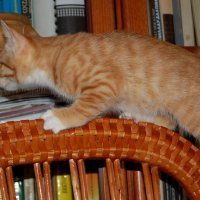Зачем люди читают книги? :: Татьяна Цыганок