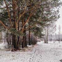 Вот такой вот февраль :: Андрей Дворников