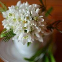 букетик весны :: Екатерина Бутина