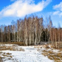 Берёзовая роща на фоне голубого неба :: Милешкин Владимир Алексеевич