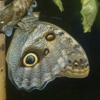 в музее бабочек :: tgtyjdrf