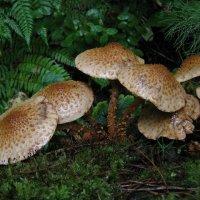 грибы :: Владимир Коваленко