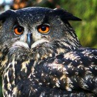 Птичка с красными глазками :: Alexander