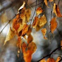 Зимние листья :: Сергей Чиняев