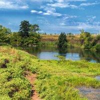 Хорошо летом у реки :: Любовь Потеряхина