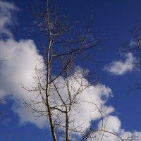 Облачная листва :: Наталия Григорьева