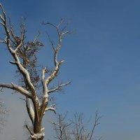 Дерево, похожее на птицу :: Наталья Тагирова