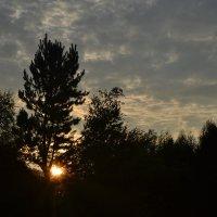 Сквозное солнце :: Анастасия Добрынина