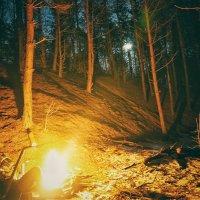 лес :: Сергей Коноплин