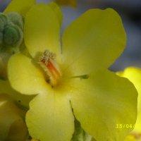 Некрасивых цветов не бывает. :: Вячеслав Медведев