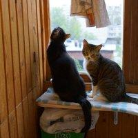 Мои Коты :: Юрий Плеханов