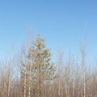 Утро в лесу :: Андрей Кузнецов