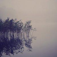 утро, туман :: Татьяна