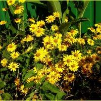 Солнечная полянка цветов :: Татьяна Пальчикова