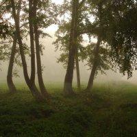 В туманной дымке :: Елена Майорова