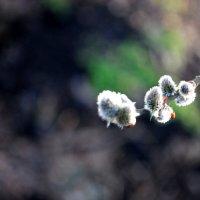 скоро весна :: Дарина Нагорна