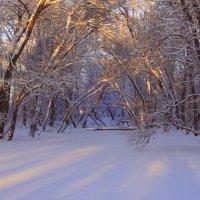 На закате зимнего дня... :: Елена Ярова