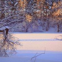 День короткий...Зимний...Бодрый... :: Елена Ярова