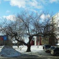 Старое дерево :: Александр Подгорный
