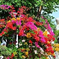 flowers Thailand :: Дмитрий Боргер