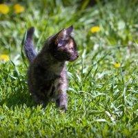 маленькая пантера :: Ольга Фролова