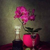 Из серии Сага об орхидее фаленопсис :: Ирина Приходько