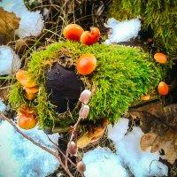 Грибы среди зимы! :: Юувиналий Дурнов