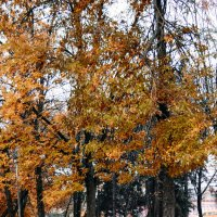 осень :: Милана Михайловна Саиткулова