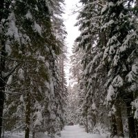 Где-то меджу Зеленогорском и Комарово... :: tipchik