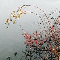 Шиповник у пруда. Отражение. :: Александр Бурилов