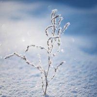 зима :: L. Anna