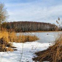 Через камыши на озеро :: Милешкин Владимир Алексеевич