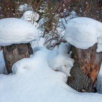 Зимние грибы :: Анатолий Иргл